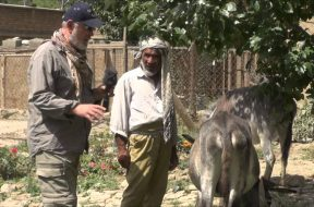 Peter Egan meets Kabul's best cared for donkeys during recent Wetnose visit to Nowzad