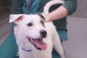 Nine Elms – Battersea Dogs and Cats Homes