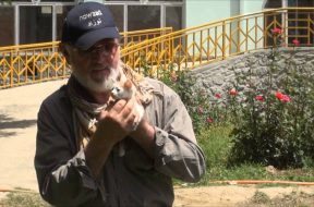 Peter Egan meets Kabul's cutest kitten during his recent Wetnose trip to Nowzad