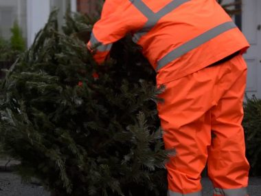 Successful Christmas Tree Collections in Wandsworth 2020